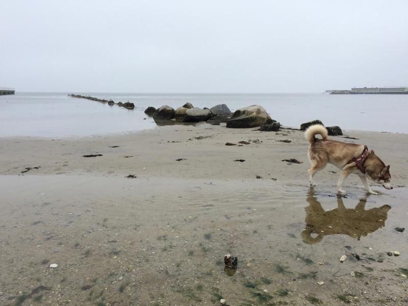 Oskar walking on a grey beach, reflected in the seawater
