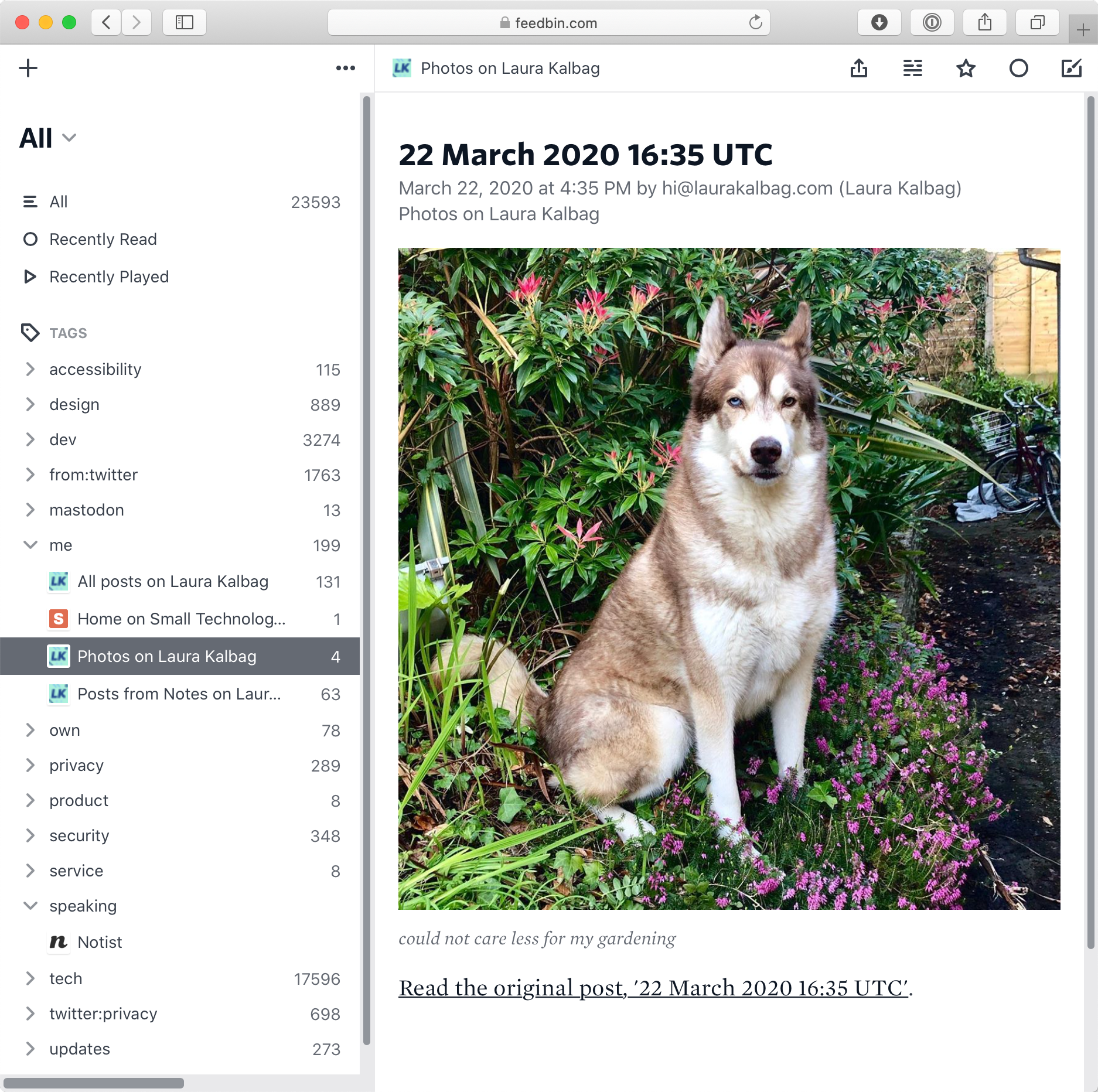 A photo of my dog in a flowerbed, displayed in the Feedbin interface in the browser.