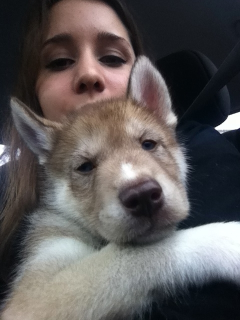 Bringing a baby Osky home in January