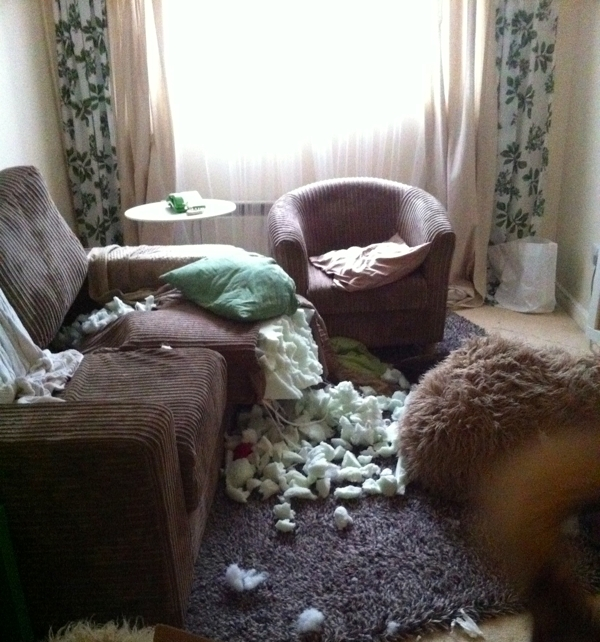 One of the many times I came back to a living room destroyed by Oskar