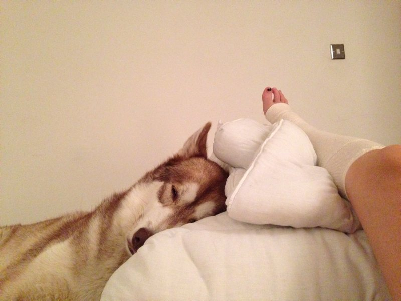 My sprained ankle up on a pillow with the dog leaning against it