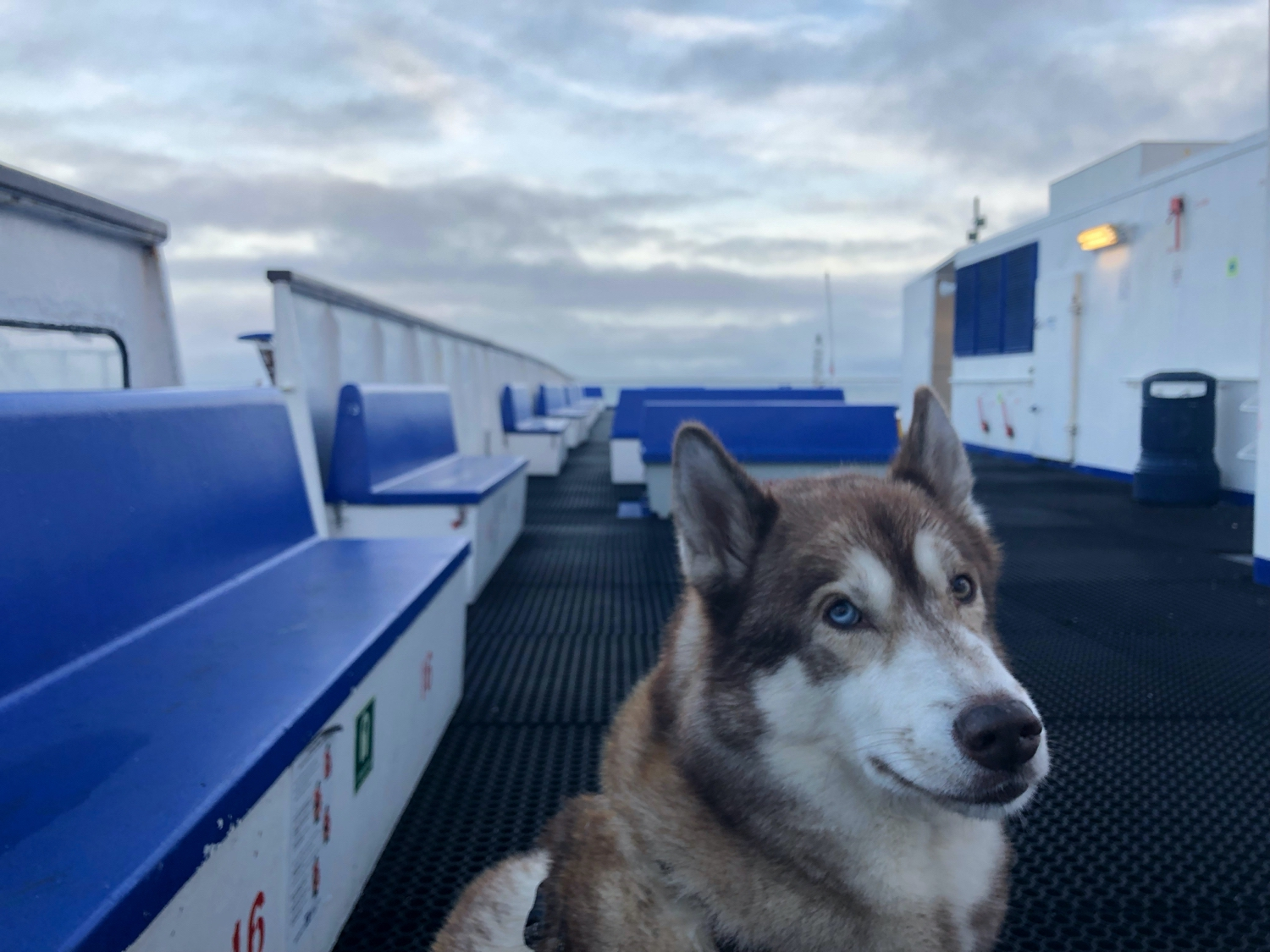 Oskar on the top deck of a ferry, looking fed up at the camera.