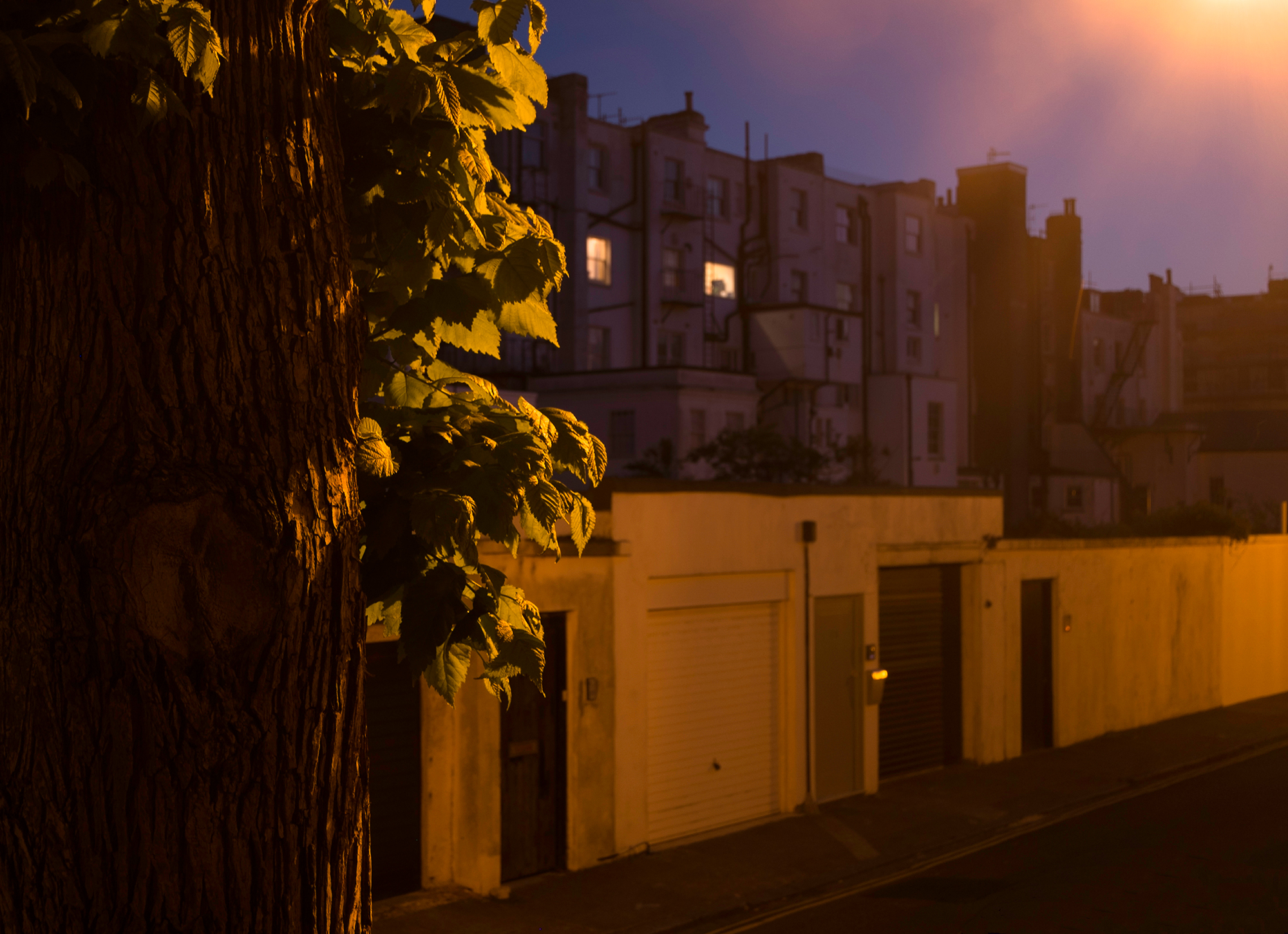 A tree with leaves glowing in the streetlight against a background of garages and the backs of buildings