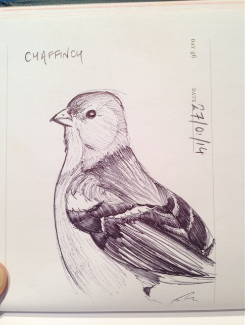 sketch of a chaffinch