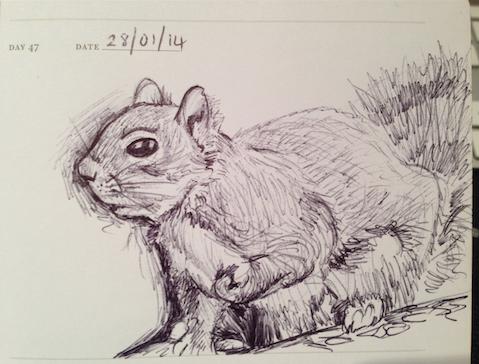 sketch of a squirrel