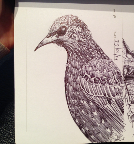 sketch of a starling