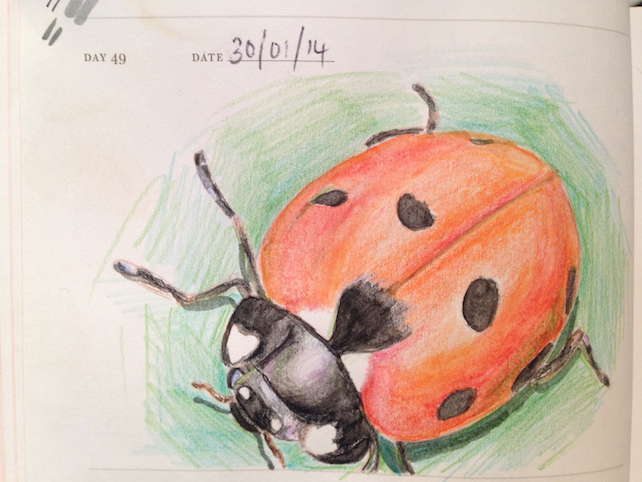 watercolour/pencil drawing of a ladybird